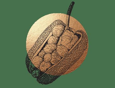 Jackfrucht veganer Fleischersatz