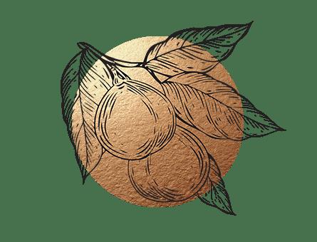 Indonesische Spezialität Lichtnuss als Gewürz